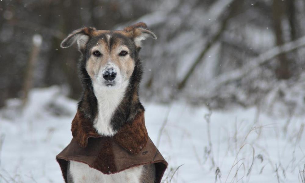 Seba-Hof-Hund